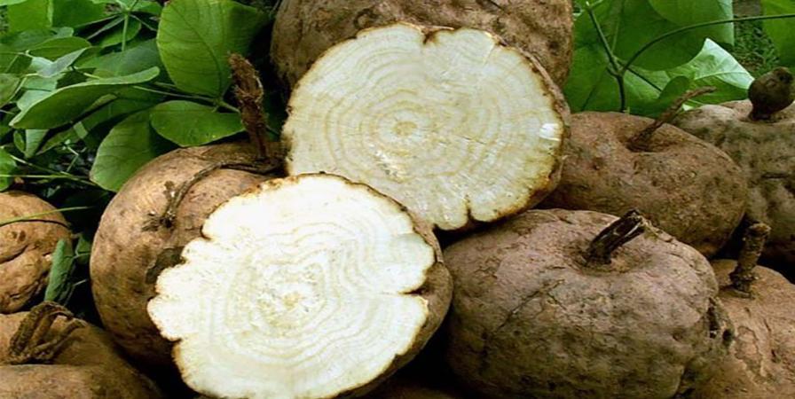 天然豐胸聖品|白高顆功效、副作用是什麼?怎麼吃最有效?