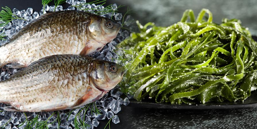 【孕期補充DHA】藻油、魚油差在哪?孕婦DHA怎麼挑?